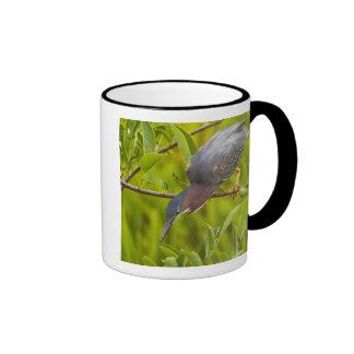 Green heron hunting from a branch ringer mug