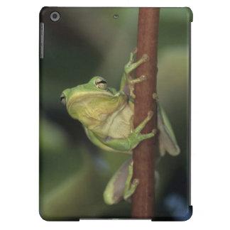 Green Treefrog, Hyla cinerea, adult on yellow Case For iPad Air