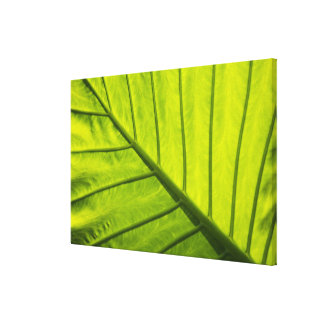 Green veined leaves of tropical foliage in gallery wrap canvas