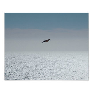 Gull flying on the sea poster