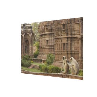 Hanuman Langurs or Black-faced, Common or Grey Canvas Print