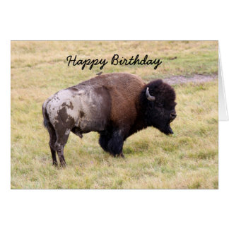 Happy Birthday, Dusty Bison Bull Humor Greeting Card