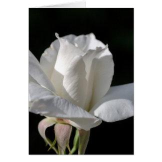 Happy Birthday - White Rose Greeting Card