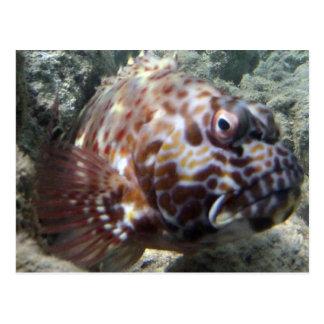 Hawaii Hawk Fish Postcard