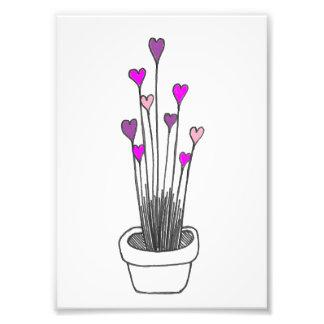 Heart Flowers Photo