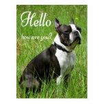 Hello Boston Terrier Puppy Dog Thinking of You Postcard