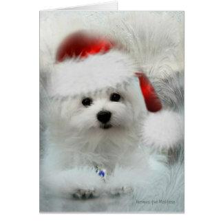 Hermes the Maltese Blank Christmas Greeting Card