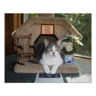 Home Sweet Home Funny Cat Poster