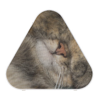 House cat covering eyes while sleeping