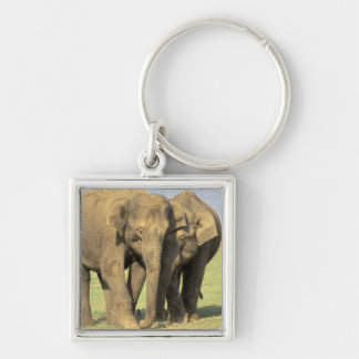 India, Nagarhole National Park. Asian elephant Silver-Colored Square Key Ring