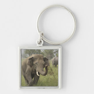 Indian / Asian Elephant greeting,Corbett Silver-Colored Square Key Ring