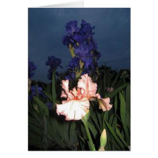 Iris At Dusk Note Card