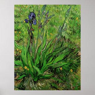 Iris by Vincent van Gogh, Vintage Garden Fine Art Poster