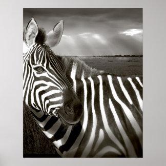 Kenya. Black & white of zebra and plain. Poster