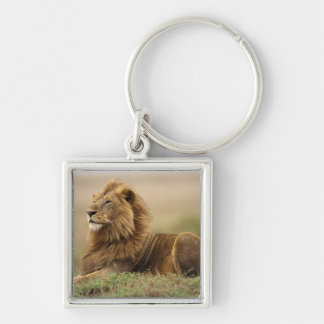Kenya, Masai Mara. Adult male lion on termite Silver-Colored Square Key Ring