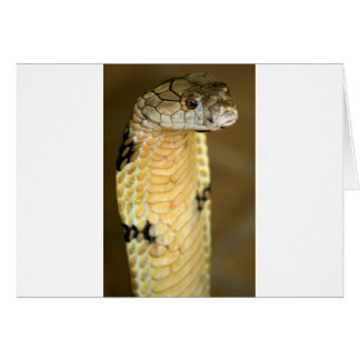 king cobra greeting card