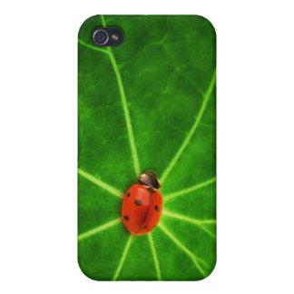 Lady Bug Print Iphone Case iPhone 4 Case