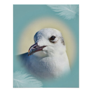 Laughing Gull Portrait Poster