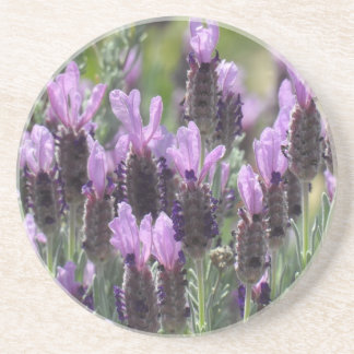 Lavender Flowers Drink Coasters