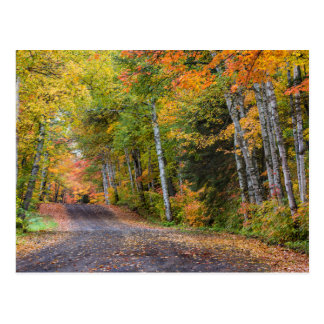 Leaf Strewn Gravel Road With Autumn Color Postcard