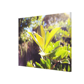 Leaves in Sun Nature Canvas Gallery Wrapped Canvas