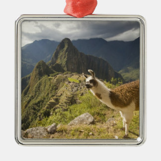 LLamas and an over look of Machu Picchu, Silver-Colored Square Decoration
