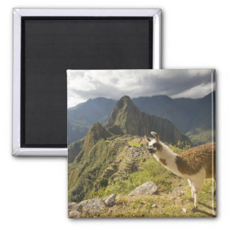 LLamas and an over look of Machu Picchu, Square Magnet