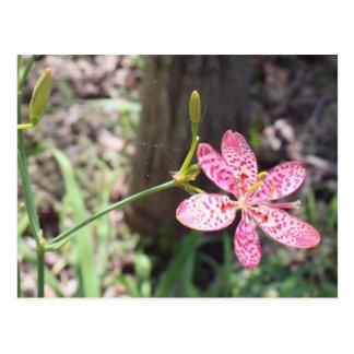 Local flora postcard