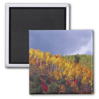 Logan Canyon in Utah in autumn with passing Square Magnet