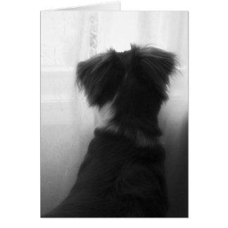 Loss of Dog Sympathy Card