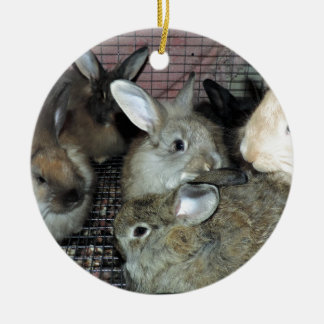 Lots of Bunny Rabbits Real Animal Photo Round Ceramic Decoration