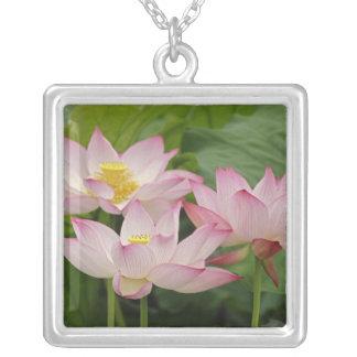 Lotus flower, Nelumbo nucifera, China 2 Square Pendant Necklace