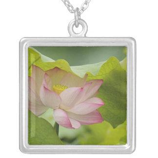 Lotus flower, Nelumbo nucifera, China Square Pendant Necklace
