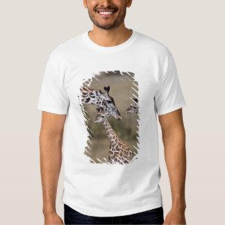 Maasai Giraffe (Giraffe Tippelskirchi) as seen Tees