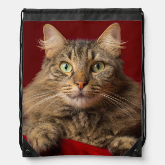 Maine Coon for Christmas with collector Backpack