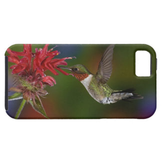 Male Ruby-throated Hummingbird feeding on Case For The iPhone 5
