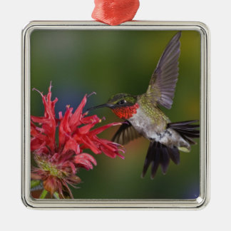 Male Ruby-throated Hummingbird feeding on Silver-Colored Square Decoration