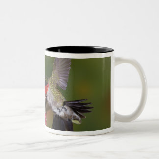 Male Ruby-throated Hummingbird feeding on Two-Tone Mug
