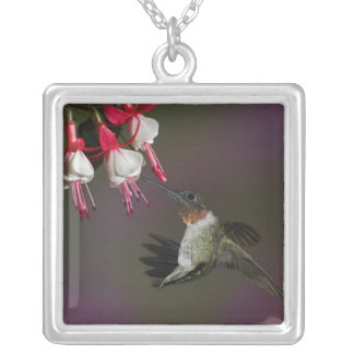 Male Ruby-throated Hummingbird in flight. Square Pendant Necklace