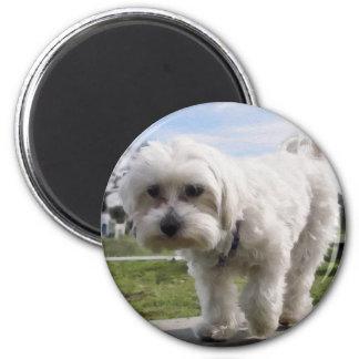 Maltese 6 Cm Round Magnet