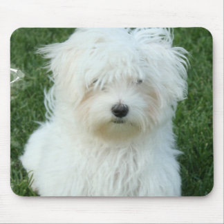 Maltese Puppies Mouse Pad