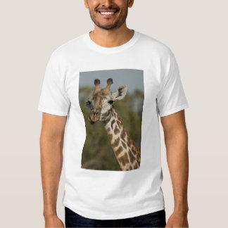 Masai Giraffe, Giraffa camelopardalis T Shirts