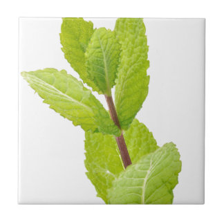 Mint leaves small square tile