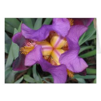 Montclair Iris Note Card