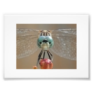 Mr Dragonfly Photographic Print