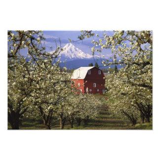 N.A., USA, Oregon, Hood River County. Red Photographic Print