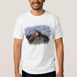 NA, Canada, New Brunswick, Shediak, World's Shirts