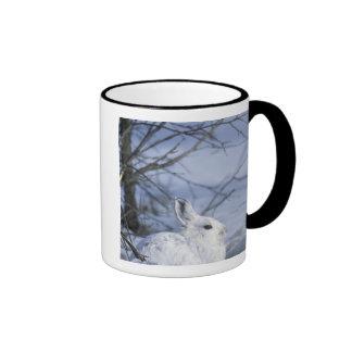 NA, USA, Alaska. Arctic National Wildlife Ringer Mug