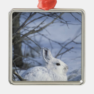 NA, USA, Alaska. Arctic National Wildlife Silver-Colored Square Decoration