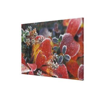 NA, USA, Alaska, Denali NP Frosted, fall-colored Canvas Prints